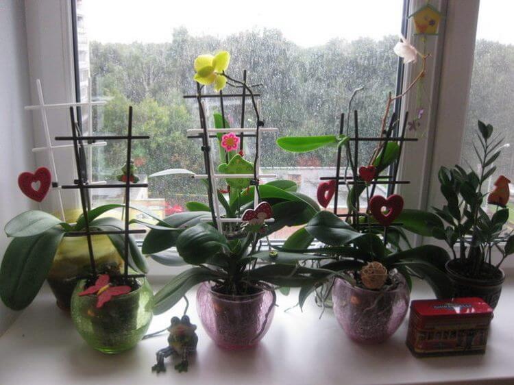 Почему нельзя держать Орхидеи дома?