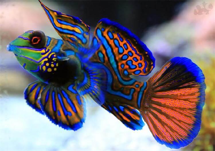 Красивые и необычные представители животного мира